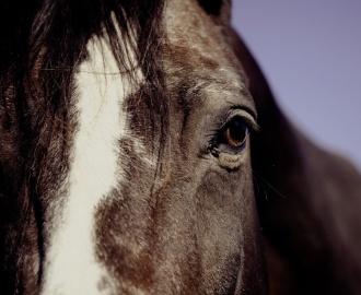 horse-594191_960_720